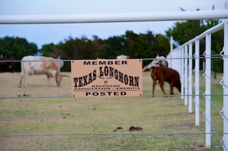 Native Cattle Company- Registered Texas Longhorns